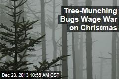 Tree-Munching Bugs Wage War on Christmas