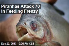Piranhas Attack 70 in Feeding Frenzy