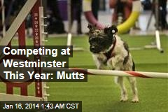 Competing at Westminster This Year: Mutts