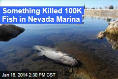 Something Killed 100K Fish in Nevada Marina