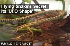 Flying Snake's Secret: Its 'UFO Shape'