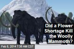 Did a Flower Shortage Kill the Woolly Mammoth?