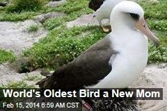 World's Oldest Bird a New Mom
