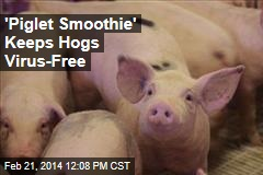 How Hogs Stay Virus-Free: 'Piglet Smoothie'