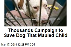 Thousands Campaign to Save Dog That Mauled Child