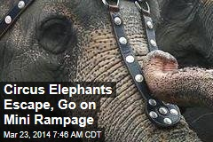 Circus Elephants Escape, Go on Rampage