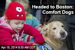 Headed to Boston: Comfort Dogs