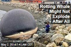 Rotting Whale Might Not Explode After All
