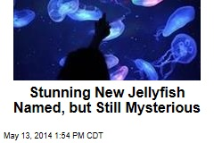 Stunning New Jellyfish Named, but Still Mysterious