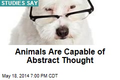 Animals Are Capable of Abstract Thought