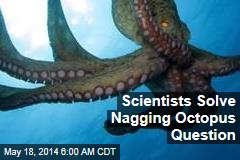 Scientists Solve Nagging Octopus Question