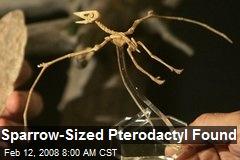 Sparrow-Sized Pterodactyl Found