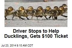 Driver Stops to Help Ducklings, Gets $100 Ticket