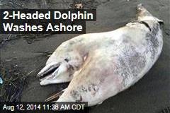 2-Headed Dolphin Washes Ashore