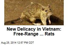 New Delicacy in Vietnam: Free-Range ... Rats