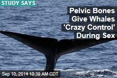 Pelvic Bones Give Whales 'Crazy Control' During Sex