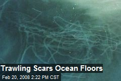 Trawling Scars Ocean Floors