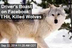 Driver's Boast on Facebook: I Hit, Killed Wolves