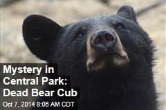 Mystery in Central Park: Dead Bear Cub