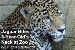 3-Year-Old Bitten in Zoo's Jaguar Display