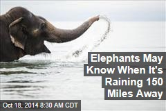 Elephants May Know When It's Raining 150 Miles Away
