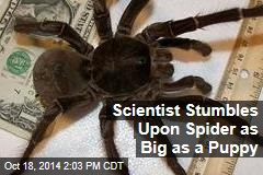 Scientist Stumbles Upon Spider as Big as a Puppy