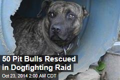 50 Pit Bulls Rescued in Dog Fighting Raid