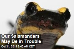 Threat to our salamanders: 'lack of biosecurity'