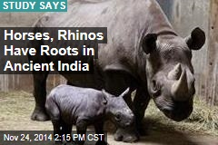 Horses, Rhinos Have Roots in Ancient India