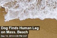 Dog-Walk Turns Up Human Remains