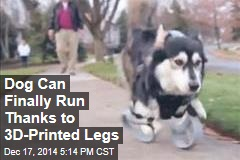 Dog Can Finally Run Thanks to 3D-Printed Legs