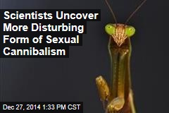 Scientists Uncover More Disturbing Form of Sexual Cannibalism