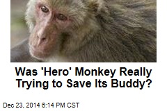 Was 'Hero' Monkey Really Trying to Save Its Buddy?