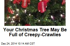 Your Christmas Tree May Be Full of Creepy-Crawlies