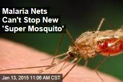 Malaria Nets Can't Stop New 'Super Mosquito'