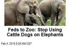 Feds to Zoo: Stop Using Cattle Dogs on Elephants