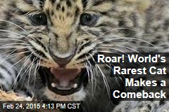 Roar! World's Rarest Cat Makes a Comeback