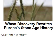 Wheat Discovery Rewrites Europe's Stone Age History