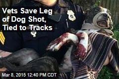 Vets Save Leg of Dog Shot, Tied to Tracks