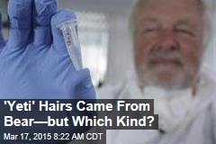 'Yeti' Hairs Came From Bear—but Which Kind?
