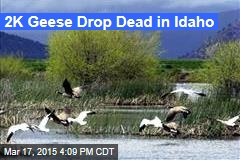 2K Geese Drop Dead in Idaho