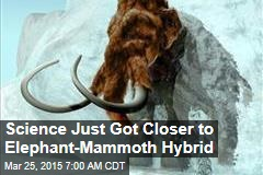 Science Just Got Closer to Elephant-Mammoth Hybrid