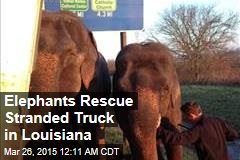 Elephants Rescue Stranded Truck in Louisiana