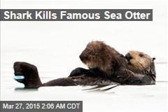 Shark Kills Famous Sea Otter