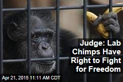 Judge: Lab Chimps Have Right to Fight for Freedom