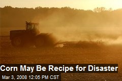 Corn May Be Recipe for Disaster
