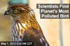 Scientists Find Planet's Most Polluted Bird