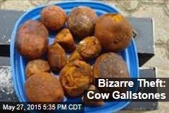 Bizarre Theft: Cow Gallstones