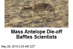 Mass Antelope Die-Off Baffles Scientists