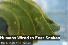 Humans Wired to Fear Snakes